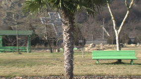 Exotic palm tree in the center of Rupite, Bulgaria. Temple of Saint Petka built Vanga, Bulgarias tourist attractions, a place of pilgrimage for fans in Rupite stock video