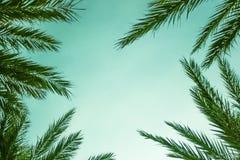 Exotic Palm Tree Leaves Border. Horizontal Royalty Free Stock Photo