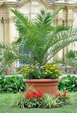 Exotic palm tree in the park Stock Photo