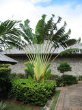 Exotic palm tree in Seychelles. Nice exotic palm tree near the house on Seychelles Stock Photos