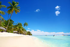 Exotic palm tree in tropical Saona Island Royalty Free Stock Images