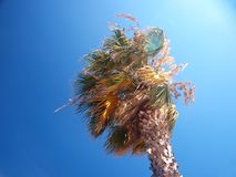 Exotic palm tree on a windy day Stock Photos