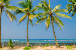 Exotic palm trees on a background of sandy beach Stock Photo