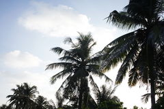 Exotic palm trees on the Maldives resort island Royalty Free Stock Images
