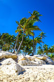 Exotic palm trees on the rocky coast of the Caribbean. In the Dominican Republic Stock Photography