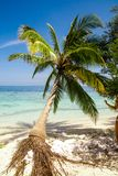 Exotic palm trees Royalty Free Stock Image
