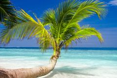 Exotic palm trees Stock Photos