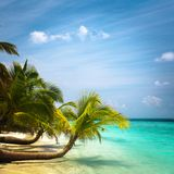 Exotic palm trees Royalty Free Stock Photo