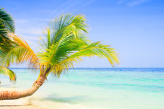 Exotic palm trees on white sand beach Stock Photography
