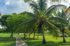 Exotic Palms Beach Resort Grounds. Beautiful Palm Stock Photography