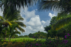 Exotic Palms Beach Resort Grounds. Beautiful Palm Royalty Free Stock Photos
