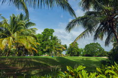 Exotic Palms Beach Resort Grounds. Beautiful Palm Stock Photos