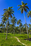 Exotic palms forest on tropical island Royalty Free Stock Photos