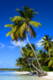 Exotic palms on sandy Caribbean beach. In Dominicana  with clear blue sky and azure water Royalty Free Stock Image