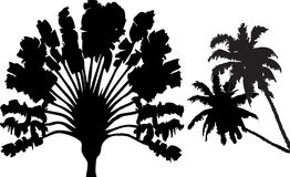 Exotic Palmtree Silhouette Stock Image