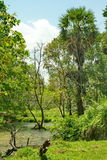 Exotic Panorama view on green tropic  lake. Exotic Panorama view on green tropic jungle lake with palms and clouds on blue sky landscape Royalty Free Stock Image