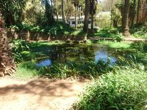 Exotic parc. Kenitra Morocco nature royalty free stock photo