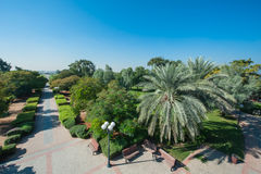 Exotic park of palm trees against the blue sky in Dubai Royalty Free Stock Images