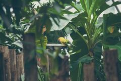 Exotic parrots Royalty Free Stock Photos