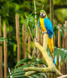 Exotic parrots sit on a branch Royalty Free Stock Image