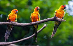 Exotic parrots sit on a branch Stock Photography