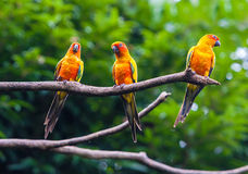 Exotic parrots Royalty Free Stock Photos