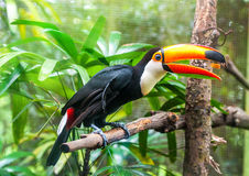 Exotic parrots Stock Photography