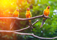 Exotic parrots Royalty Free Stock Photo