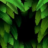 Exotic pattern with tropical leaves banana on a black background Stock Photo
