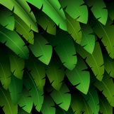 Exotic pattern with tropical leaves banana on a black background Royalty Free Stock Photography