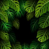 Exotic pattern with tropical leaves on a black background Stock Photo