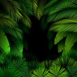 Exotic pattern with tropical leaves on a black background Royalty Free Stock Photos