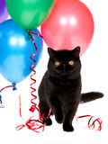 Exotic Persian cat with party balloons. Black Exotic Persian cat with balloons, on white background royalty free stock photography