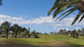 Exotic Phoenix canariensis, locally known as palmera canaria, or the Canarian palm tree, in Tenerife, Canary Islands. Horizontal view of lush golf course with Royalty Free Stock Images