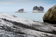 Exotic pig island at belitung indonesia Royalty Free Stock Photography