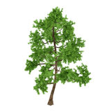 Exotic pine tree Stock Photo