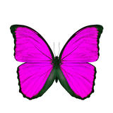 Exotic pink butterfly isolated on white background Stock Images