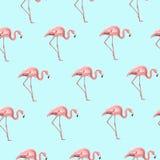 Exotic pink flamingo bird on blue seamless pattern. Exotic pink flamingo birds seamless pattern on sky blue background. Elegant long legged wading birds striding Stock Photography