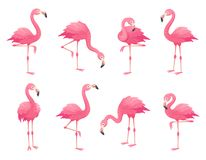 Exotic pink flamingos birds. Flamingo with rose feathers stand on one leg. Rosy plumage flam bird cartoon vector stock illustration