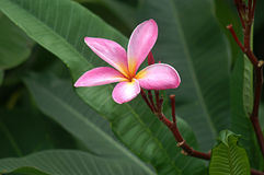 Exotic Pink Flower Stock Photos