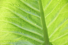 Exotic plant background with raindrops Royalty Free Stock Photos