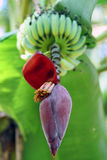 Exotic plant and bananas Stock Images