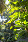 Exotic Plant in Botanical Garden Stock Image