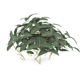Exotic plant bush Stock Photography