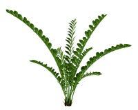 Exotic plant bush Royalty Free Stock Images