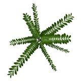 Exotic plant bush top Stock Images