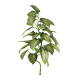 Exotic plant bush tree Stock Photo