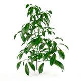 Exotic plant bush tree Stock Photo