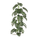 Exotic plant bush tree Stock Image
