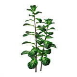 Exotic plant bush tree Royalty Free Stock Photos